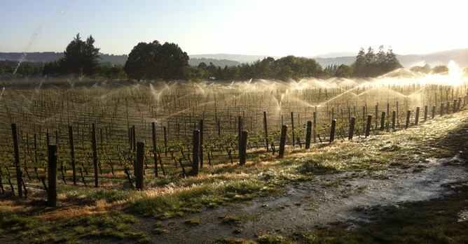 Fighting frost with sprinklers 5 Nov
